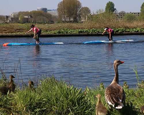 SUP 2019 NK Haarlem dames race